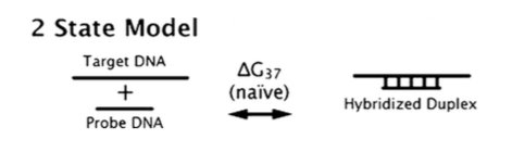 2 state model for duplex hybridization