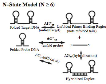 multi-state model for coupled equilibrium