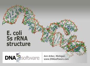 Apr29.2009.E-coli_5srRNA_image-small