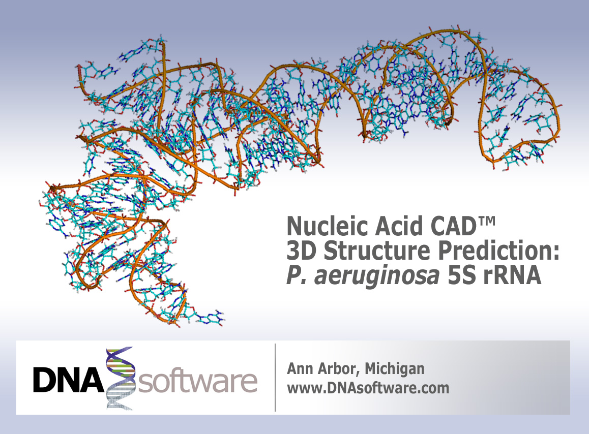 nucleic acid cad 3d structure
