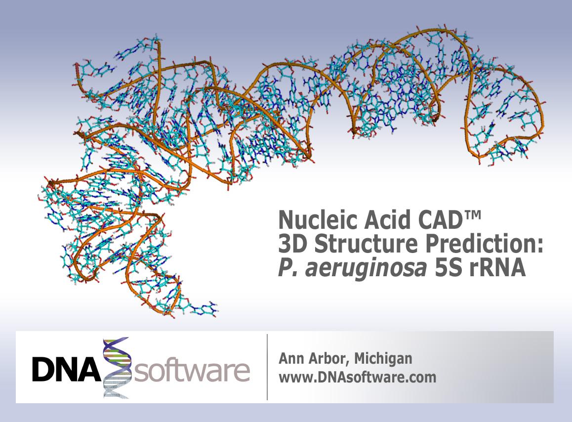nucleic acid cad 3d structure